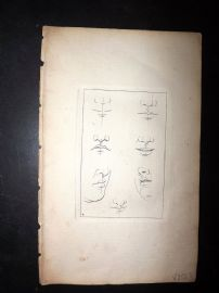 Sayer Compleat Drawing-Book 1757 Antique Print. Studies of Noses & Lips 04